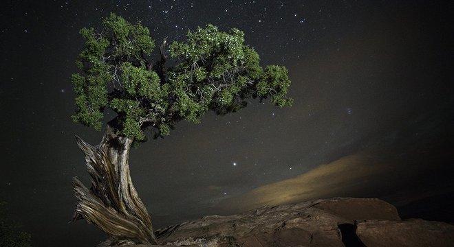 Moon explica que a definição de 'antiga' varia de acordo com cada espécie de árvore