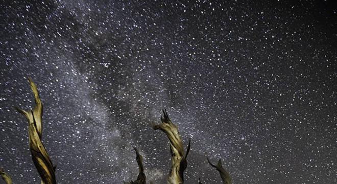 A fotógrafa faz um alerta: grandes árvores antigas estão padecendo diante das mudanças climáticas
