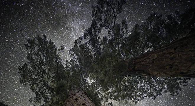 'Testemunhar a morte de algumas de nossas árvores mais antigas é não só inesperado, mas devastador', diz Moon