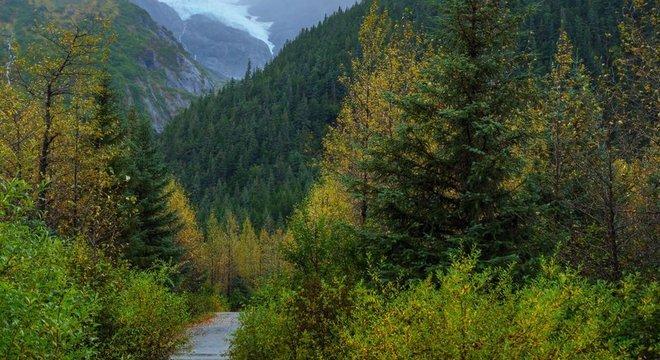 Biomas do Hemisfério Norte, como a tundra e a taiga, também guardam espécies e processos biológicos com pouca interferência humana