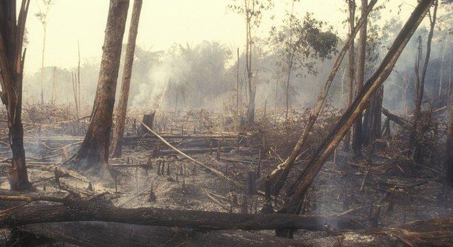 'O desmatamento inibe investimento — que investidor sério vai querer investir na Amazônia, rodeada por ilegalidade?'