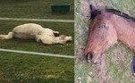 Uma série de ataques horripilantes contra animais está assombrando regiões da França. Além de cavalos, agora bezerros são alvos de uma força misteriosa ou pessoas extremamente cruéis e mal intencionadas, as autoridades ainda não sabem a resposta