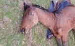 Cerca de 15 cavalos já foram vítimas da onda de ataques desde o início do ano, ainda um mistério total para policiais franceses