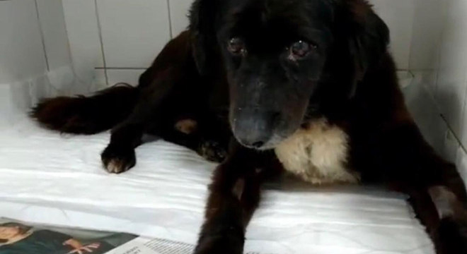 Cinco animais seguem internados em estado grave