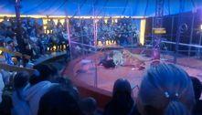Leoa ataca domador e transforma apresentação de circo em caos