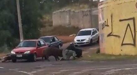 Porco ataca entregador em Franca (SP)