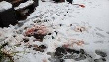 Ataques de esquilos 'sedentos de sangue' espalham terror em NY