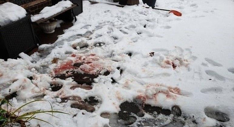 Animal atacou uma moradora no pescoço e cabeça e deixou um rastro de sangue