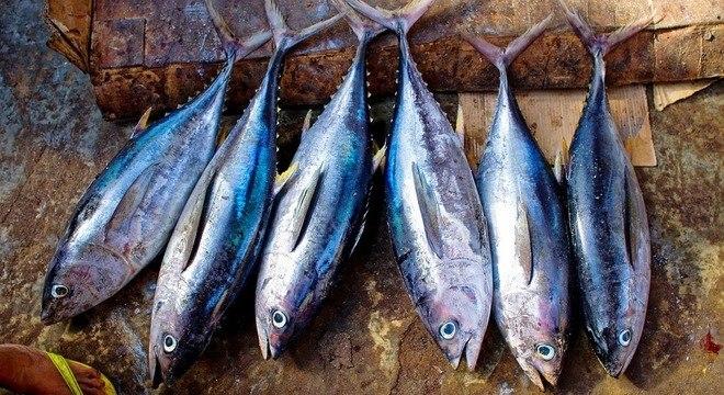 O atum está entre os peixes com alta concentração de ômega-3