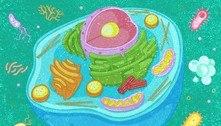 Entenda as diferenças entre célula eucarionte e procarionte