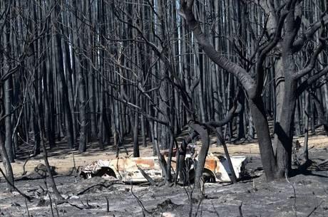 Incêndios na Austrália ameaçam espécies nativas