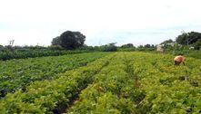 Senado aprova auxílio emergencial para agricultores familiares