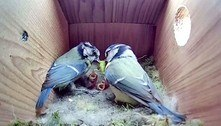Família de aves dedicadas é a estrela do momento no YouTube