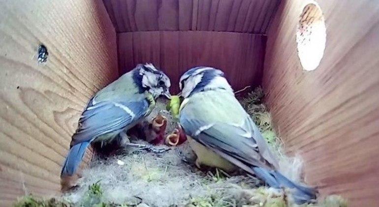 Os filhotes estão sempre famintos