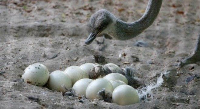 Quinze animais nasceram no período de fechamento