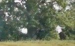 O animal misterioso foi registrado após uma partida de críquete em um campo na cidade Barnsley