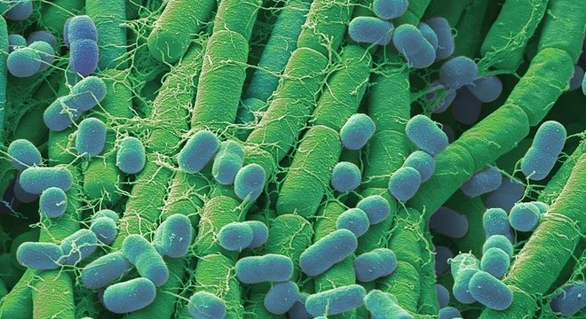 As formas de vida mais primitivas evoluíram em organismos mais complexos