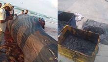 Carcaça de baleia arrastada à costa garante R$ 7,8 mi a pescadores