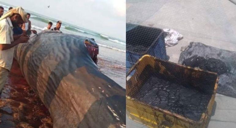 Grupo de pescadores encontrou o equivalente a R$ 7,8 milhões em 'vômito' de baleia