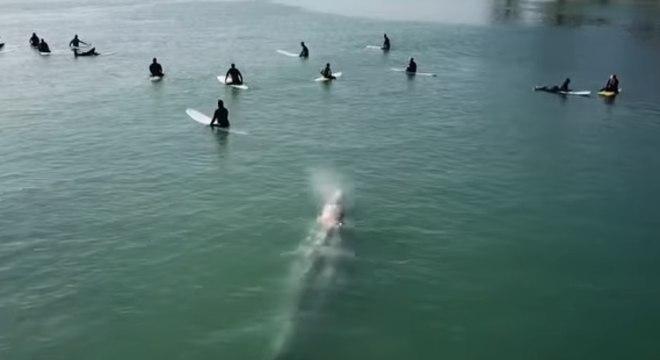 Baleia passa sob grupo de surfistas no litoral Sul da Califórnia