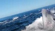 Baleia acerta embarcação e quase devora homem lançado ao mar