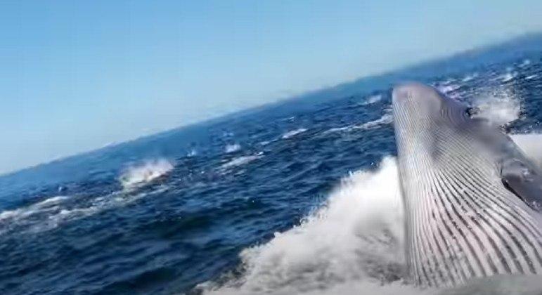 Baleia acertou barco em cheio na África do Sul e quase devorou um homem lançado ao mar