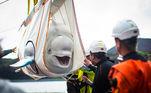 Uma sequência de fotos do retorno de duas baleias belugas ao mar aberto tem derretido corações pela web. Desde 2011, Little Grey e Little White não viam sua casa. Elas foram resgatadas de um aquário de exibição na China, mas agora têm uma nova chance
