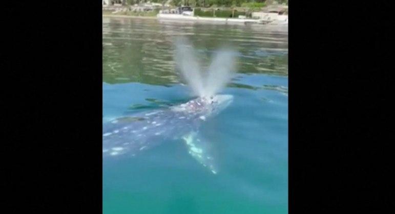 Um grupo de mergulhadores fez as imagens do animal em Nápoles