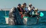 Um barco cheio de turistas na costa do México quase perdeu o momento em que uma baleia descrita como