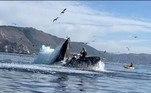 'Voltamos para o carro e um monte de peixes saiu da minha camiseta', conta Liz. A única 'vítima' da baleia foi a chave do carro de Julie, que acabou no fundo do marRecentemente, outra mulher foi parar no hospital após ser 'atropelada' por uma baleia. Veja a seguir!