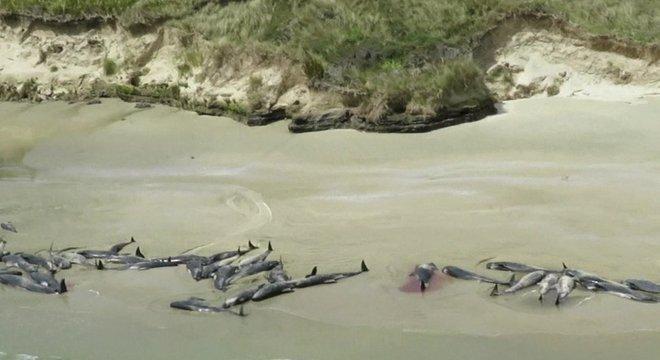 O Departamento de Conservação disse, em um comunicado, que não é incomum que baleias fiquem presas em praias da Nova Zelândia e que há cerca de 85 incidentes por ano