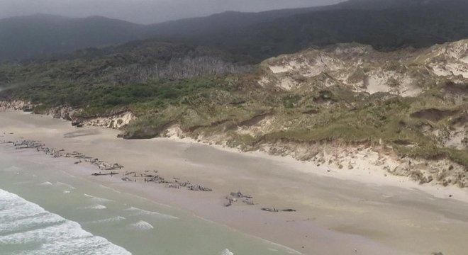 Não está claro o que levou os animais a ficarem presos na areia