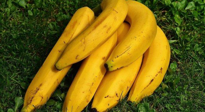 Diversidade na cultura da banana é chave