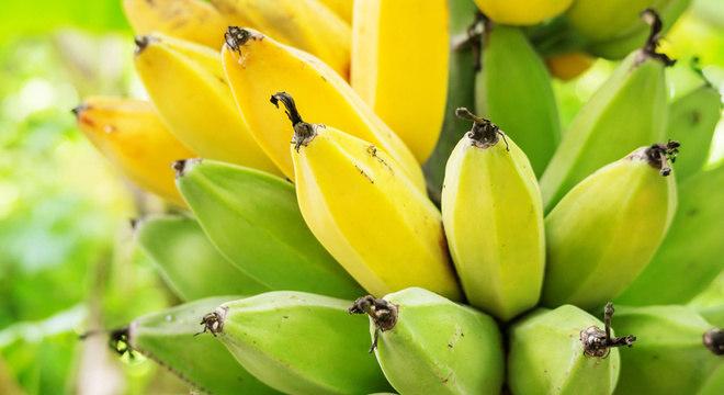 As bananas fazem parte da dieta de cerca de 400 milhões de pessoas no mundo todo, segundo a Universidade de Wageningen