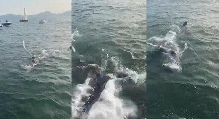 Banhistas avistam baleia jubarte em Santos (SP)