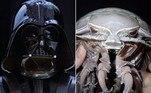 Uma barata do mar comparada ao Darth Vader por alguns veículos de comunicação foi identificada como uma nova espécie de isópode gigante