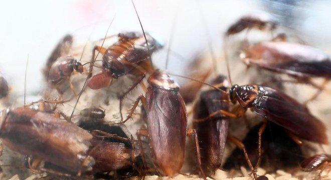 Declínio de predadores naturais pode causar aumento na população de insetos