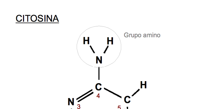 base da molécula