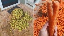 Morador acha 40 kg de batata e 30 kg de cenoura na varanda de casa