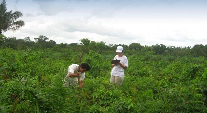 O monitoramento ecológico da restauração é feito periodicamente para garantir o sucesso. Na foto, a técnica usada foi regeneração natural assistida