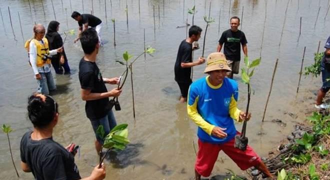 Plantar e restaurar florestas de mangue fornece proteção natural valiosa para costas vulneráveis