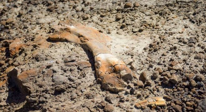 Fósseis descobertos por Nathan pertenciam a um hadrossauro