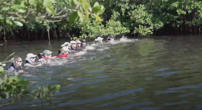 Voluntários se juntam para fazer resgate de golfinhos em um canal