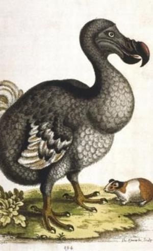O dodô se tornou um símbolo da extinção decorrente da ação humana