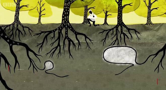 """Fungos são os responsáveis por permitir a """"conversa"""" entre as árvores"""