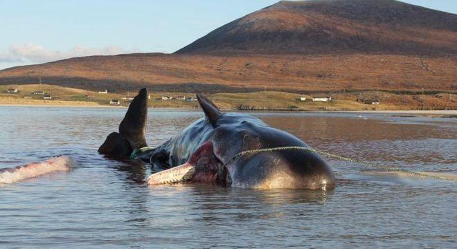 Redes de pesca e copos de plástico estavam entre os resíduos achados no estômago da baleia