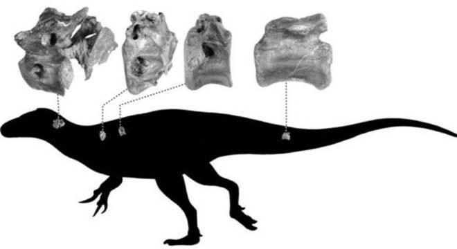 Uma silhueta de um terópode indicando de onde eram os ossos