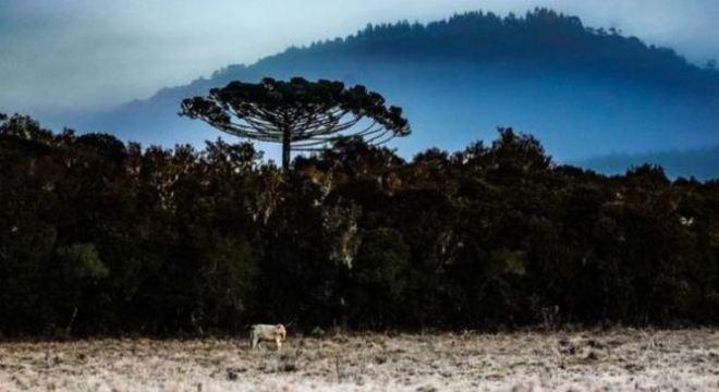 Foto de arquivo mostra Serra Catarinense no amanhecer, com geada e névoa