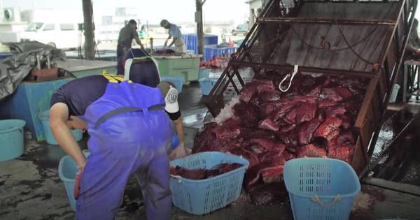 Japão, o país onde as baleias voltaram ao cardápio
