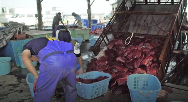Japão voltou a caçar baleias em 2019